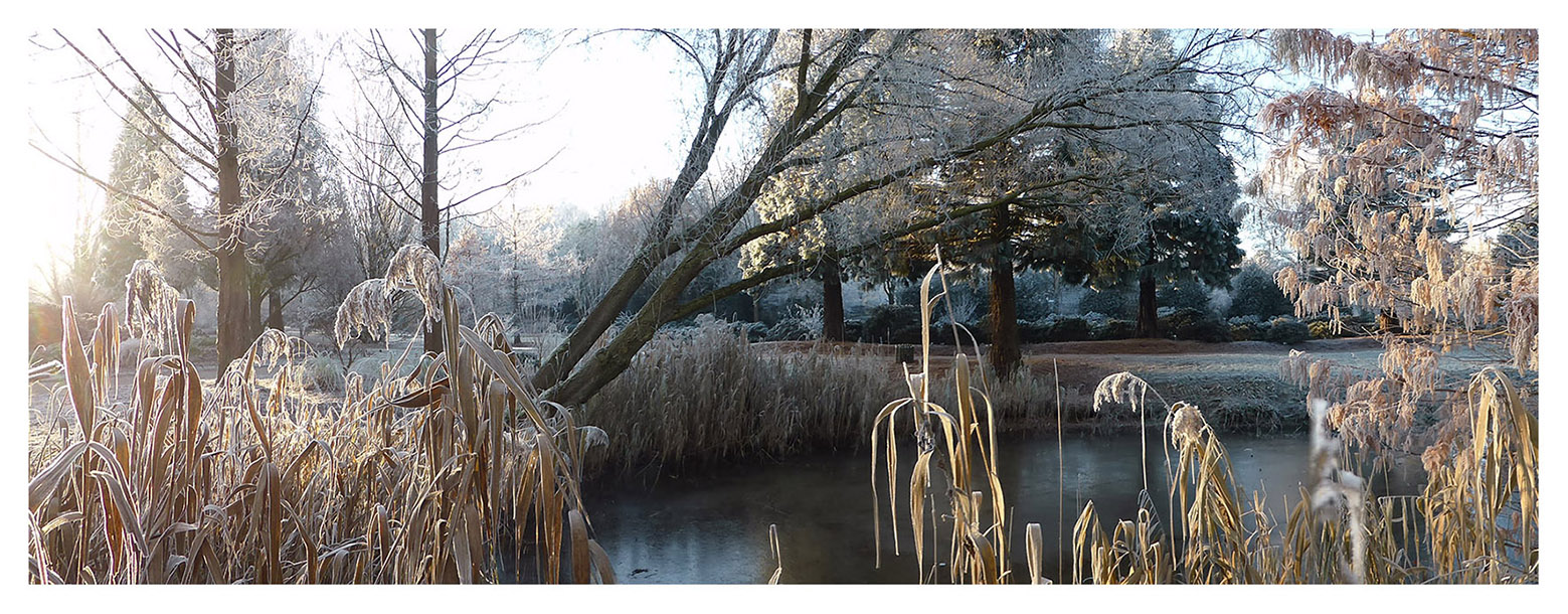 Winterimpression, Blick in den Park